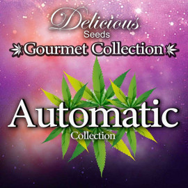 Gourmet Collection Automatic 2