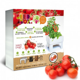 Seed Box Tomate Cherry