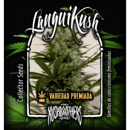 KIT COMPLETO EXTERIOR KUSH BROTHER 10 SEMILLA FERMINIZADA 50L XL