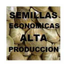 SEMILLAS ECONOMICAS (ALTA PRODUCCION)